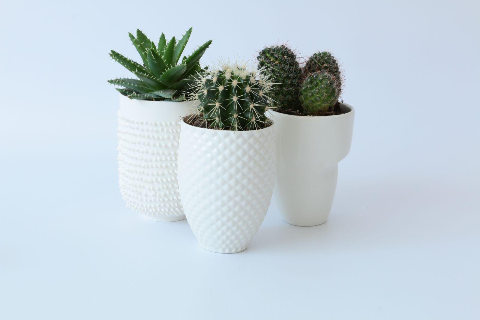 Sukulenty i kaktusy w białej ceramice