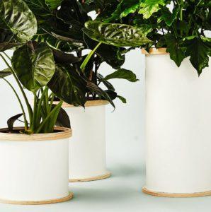 Białe cylindryczne donice z brzegiem ze sklejki, z roślinami