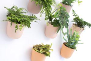 Osłonki Poppy na ścianie, z roślinami