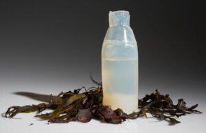 Przezroczysta butelka z alg